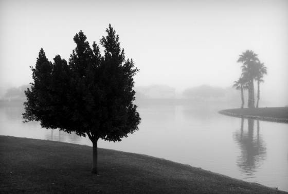 Tree_in_fog