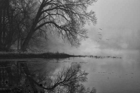 Foggy_landing