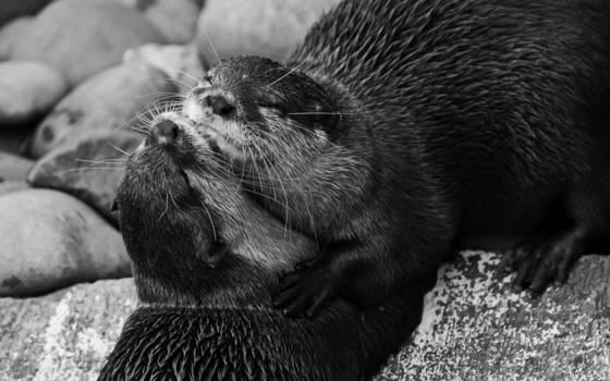 Otters_love