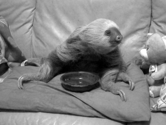 Sloth on lounge