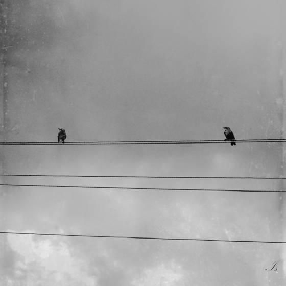 Untitled_08