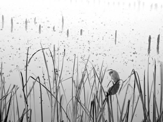 Bay_park_fog_7