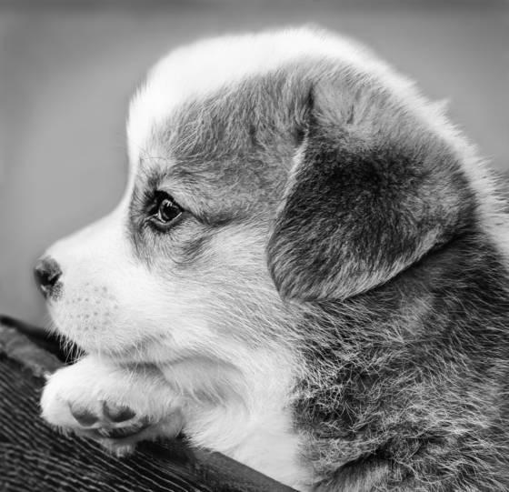 Pup_4
