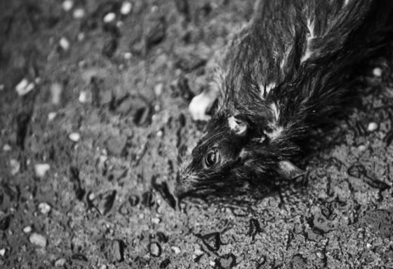 Dead_mice