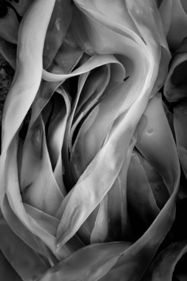 Seaweed_91