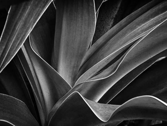 Botanical__6