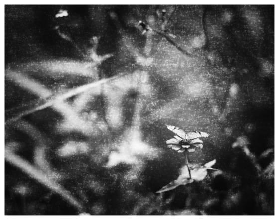 3__mystical_nature__1