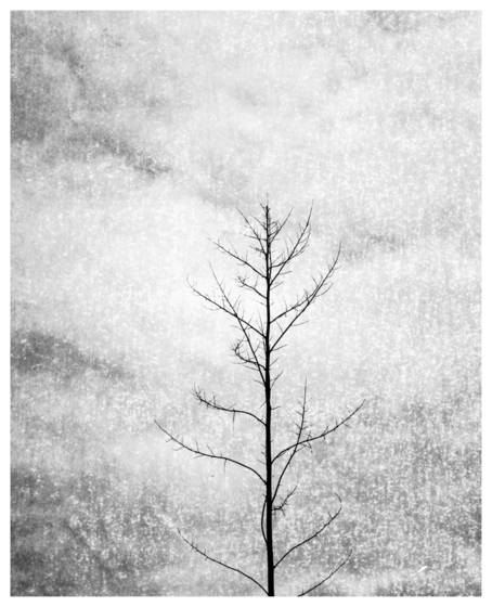 4__mystical_nature__2