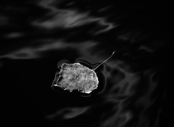 Floating_leaf_and_reflection
