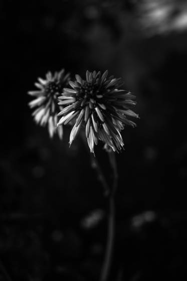 8_botanical_gardens