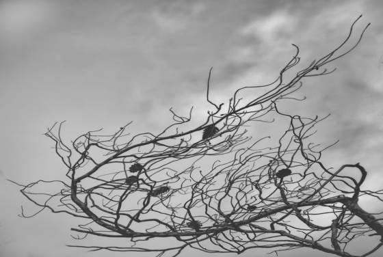 Trees_no___2