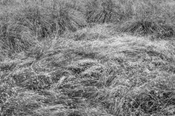 Meadow_light