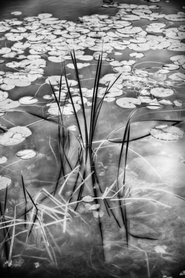 Water_grass