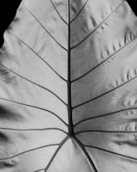 Botanical_delta
