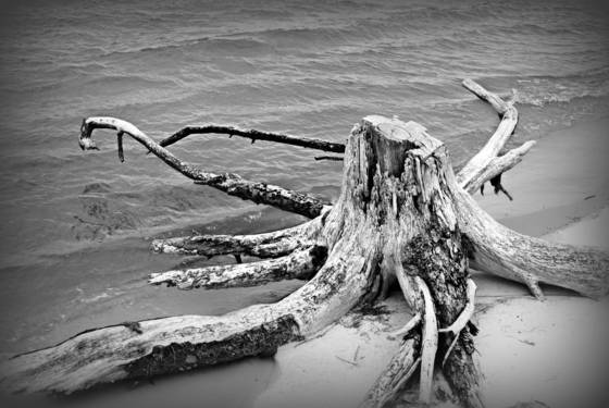 Uprooted_orange_beach