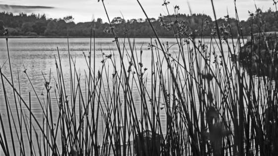 Loch_erna_through_sedge