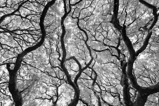Ancient_woodlands_mcxiii