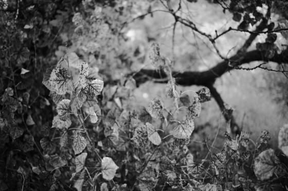 Untitled_059
