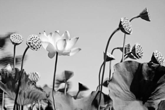 Botanicals_2
