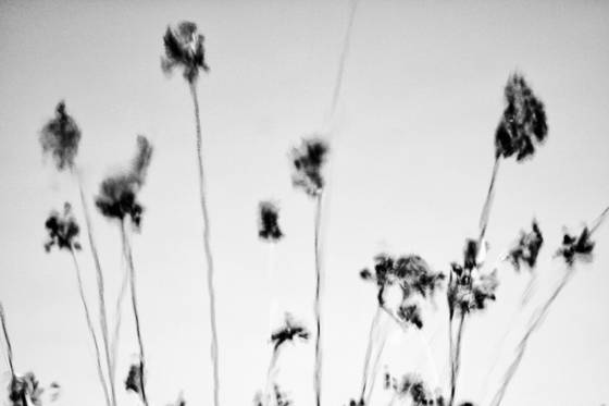 Botanicals_4