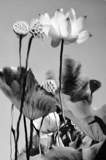 Botanics_7