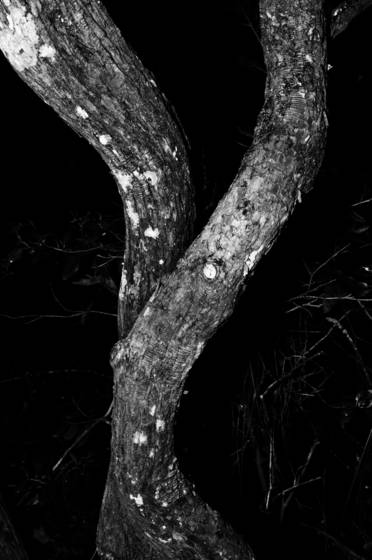 Intertwining_branches