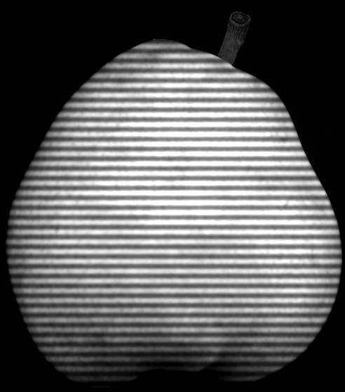 The striped pear