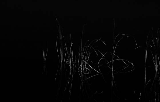 Light_painted_reeds__acadia_national_park__me__2012