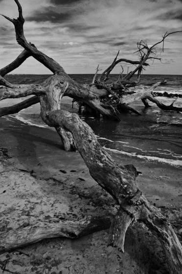 Atlantic driftwood