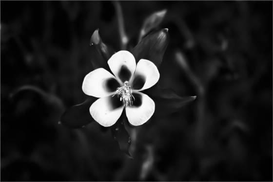 Sad_flower