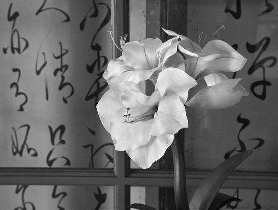 Lilies___calligraphy