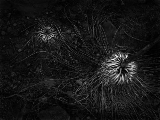 Desert_07-56
