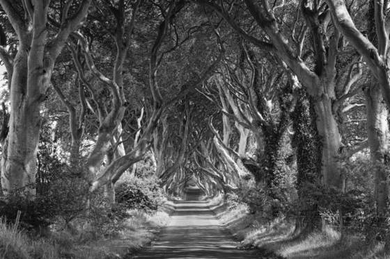 The_dark_hedges_3