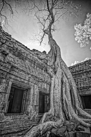 Silk_cotton_2_angkor_wat_2012