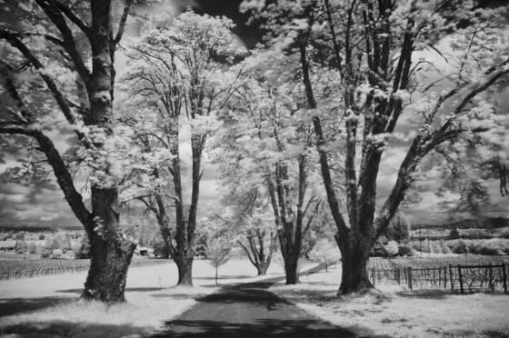 A_white_spring_1