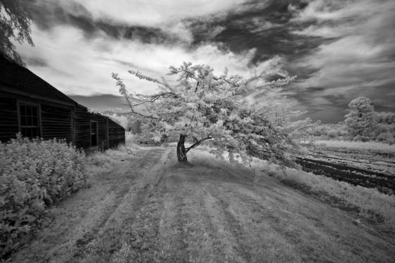 Schoolhouse_farm_tree