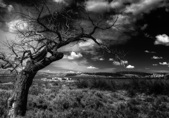 Framing_tree