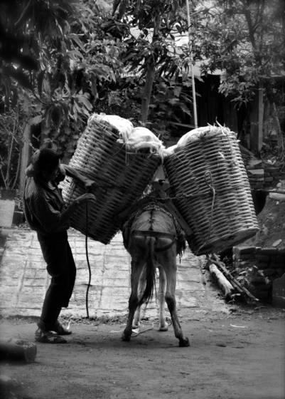 El_trabajo_del_burro