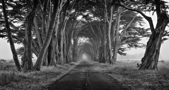 Tree_tunnel