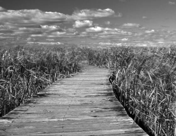 Marsh_boardwalk