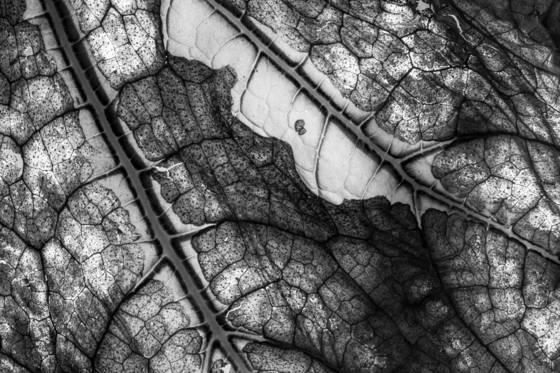 Decaying_leaf