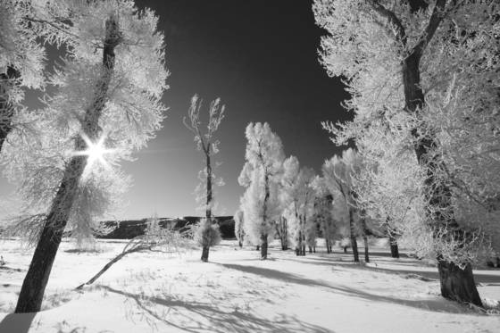 Frosty_trees_yellowstone_np_2009