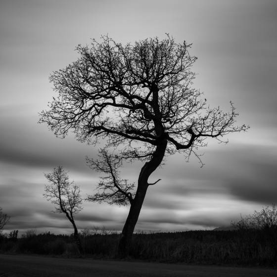 Morningtree