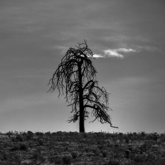 Roadsidetree