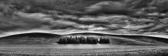 Palouse_tree_grove