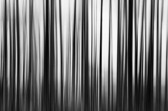 Burnt_trees_with_motion-glacier_national_park_mt-2008