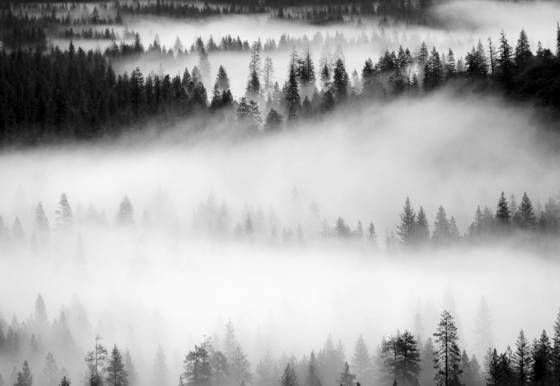 Fog and trees 2