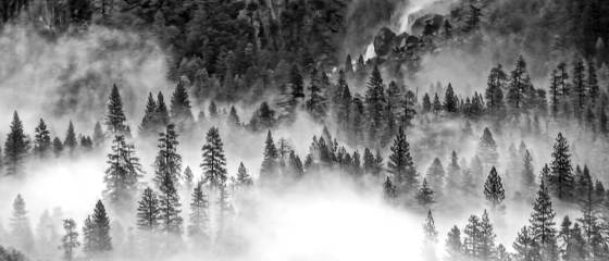 Fog and trees 5