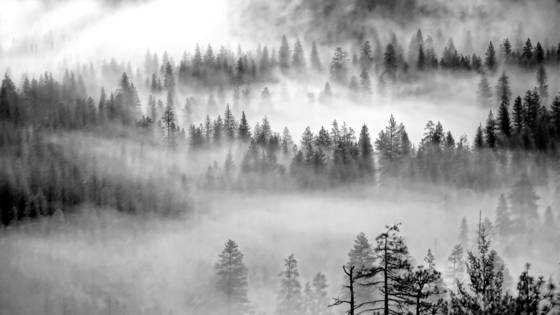 Fog and trees 6