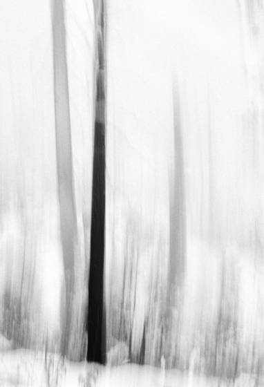 Fog_and_trees_equivelent_ii